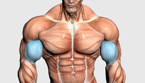 عضلات جلو بازوه