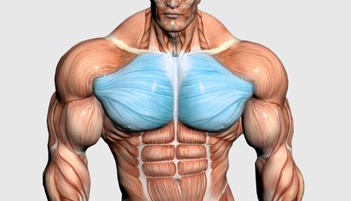 ۱۰ حرکت برتر عضلات سینه