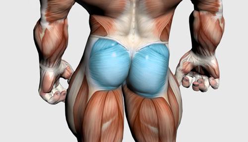 عضلات سرینی و باسن