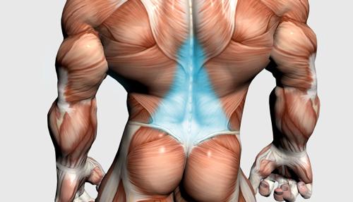 عضلات فیله کمر