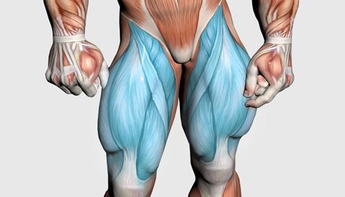 عضلات چهار سر و جلو ران