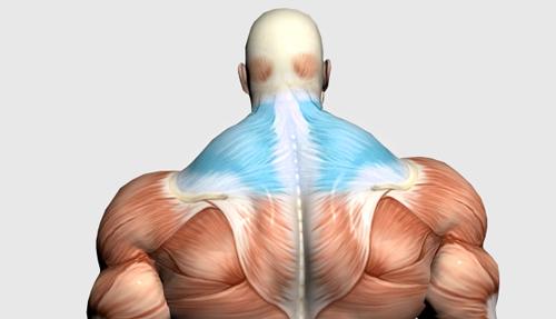 عضلات کول