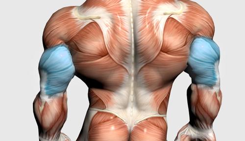 عضلات پشت بازو