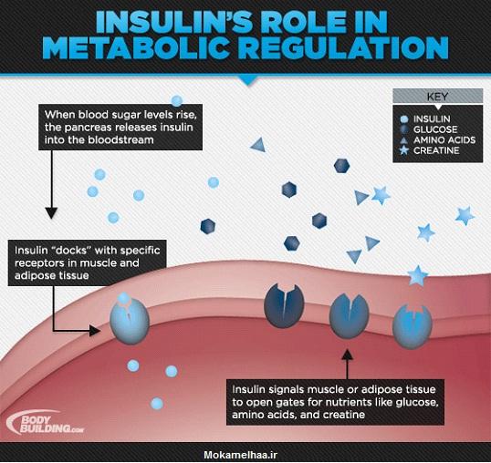 راهنمای کامل در مورد انسولین و نقش آن در عضله سازی,نحوی مصرف انسولین,بهترین انسولین برای بدنسازی,انسولین در بدنسازی,مصرف انسولین برا حج عضلانی,انسولین چیست,بهترین زمان مصرف انسولین,مصرف انسولین برای بدنسازی