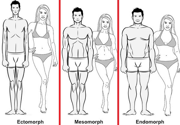 انواع تیپهای بدنی و ویژگیهای آن