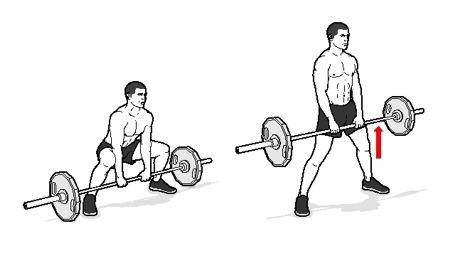 عکس کاملترین و جامع ترین راهنمای بدن سازی بانوان (بخش اول)