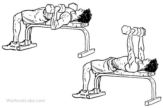 عکس برنامه سینه و جلو بازو (FST-7) از مربی بزرگ هنی رامبد