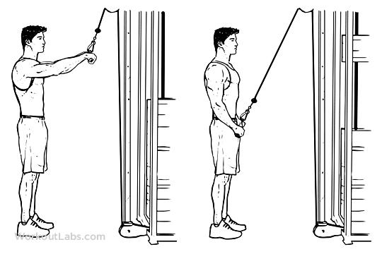 10 Straight Arm Pulldown 1