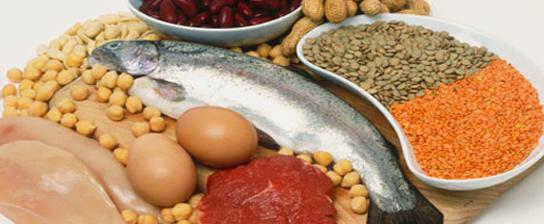 ۱۶ منبع پروتئینی کامل و با کیفیت که میتوانید از آنها استفاده کنید