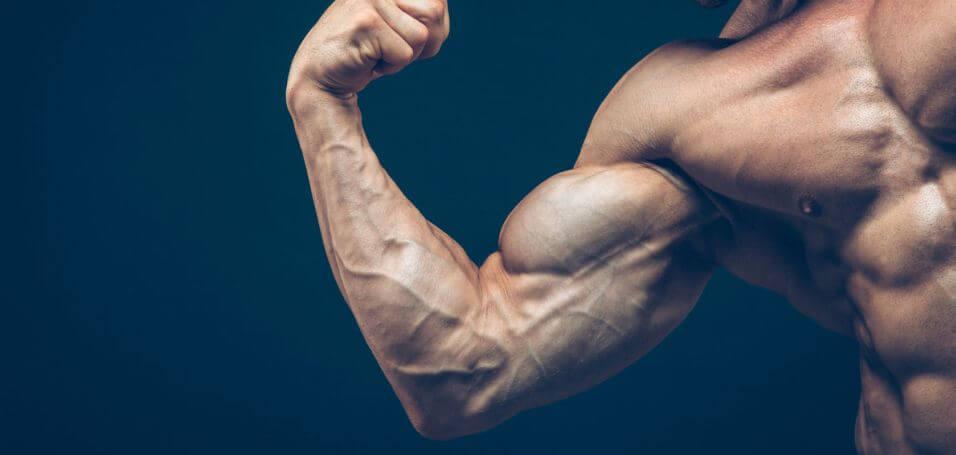 عکس چگونه به شکل طبیعی سطح تستوسترون بدن را افزایش دهیم (بخش دوم و آخر)
