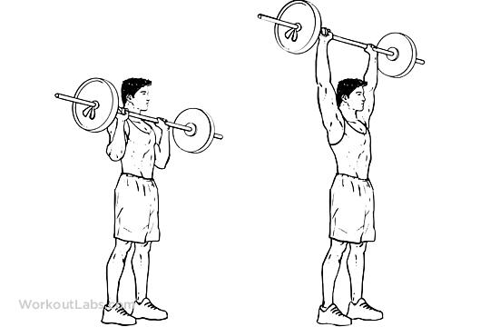 اصول غذایی و تمرینی به منظور افزایش حجم برای اکتومورف ها