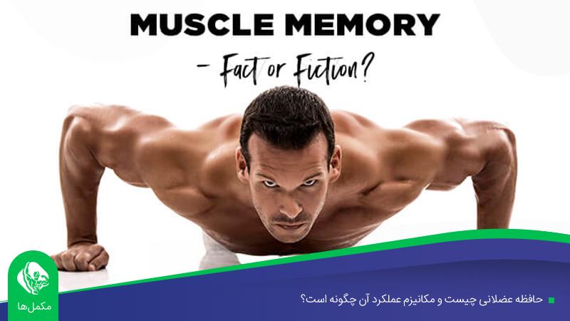 حافظه عضلانی چیست و مکانیزم عملکرد آن چگونه است؟
