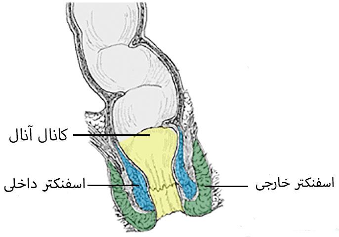 ساختار مقعد