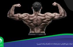 ۵ حرکت برای افزایش حجم عضلات لت (همراه برنامه تمرینی)