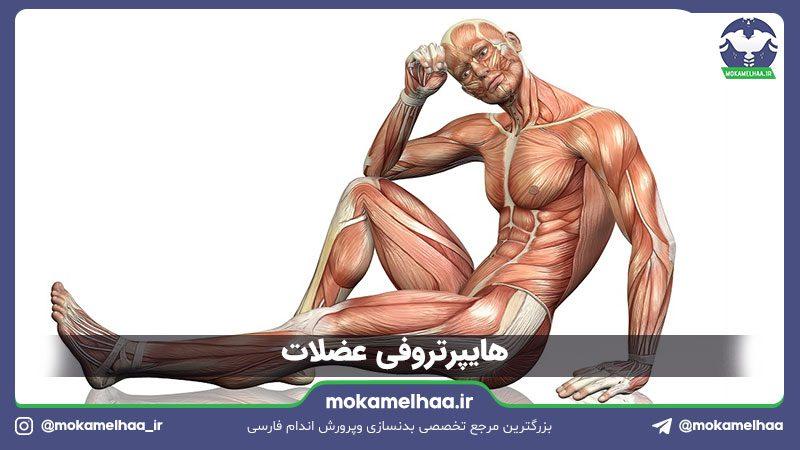 هایپرتروفی عضلات