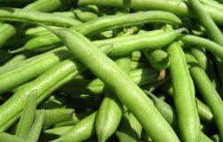 خواص لوبیا سبز,خوردن لوبیا سبز,لوبیا سبز در بدنسازی,خوردن لوبیا سبز,رژیم,رژیم غذایی,مصرف لوبیا سبز,بدنسازی